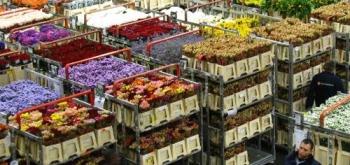 Прямые закупки цветов