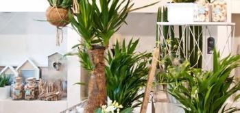 Особенности ухода за растениями в условиях магазина