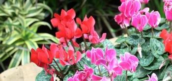 Горшечные растения. Обзор производителей