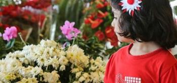 О цветочных выставках 2016