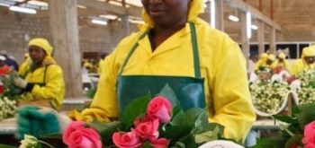 О производителях срезанных цветов