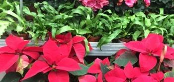 Сезонность продаж в цветочном бизнесе